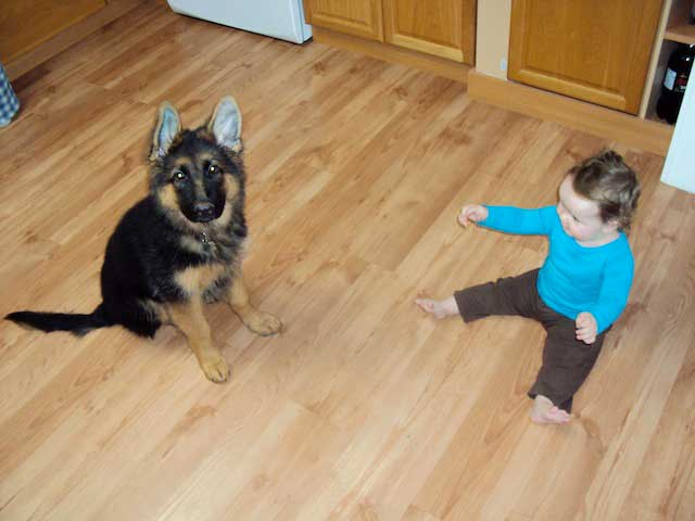 German Shepherd Dogs with Children